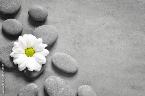 Set of white flower on pebble