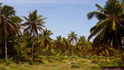 The tropical forest, palm trees on the beach background of palm trees.