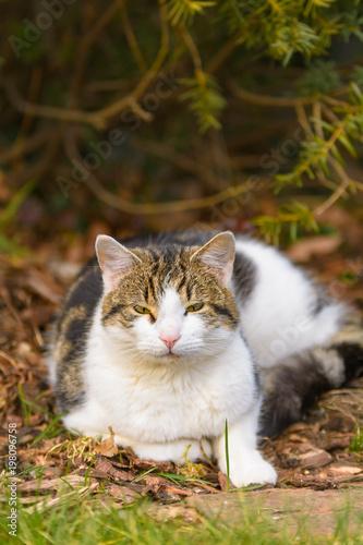 Eine Katze liegt entspannt im Garten unter Bäumen - 198096758