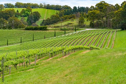 Fotobehang Pistache Spectacular countryside landscape of green vineyard
