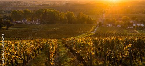 Vineyard Sunrise in Bordeaux Vineyard, Gironde