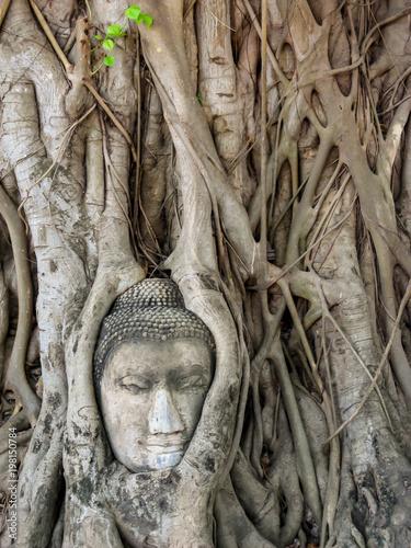 Fotobehang Boeddha Buddhakopf in Ayutthaya Thailand