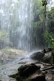 water rain forest nature holiday