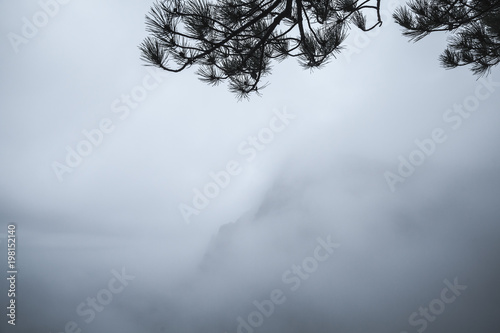 Foto op Canvas Zen Pine tree branches silhouette over blue fog