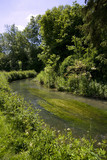 The River Churn in summer in Baunton in the Cotswolds, Gloucestershire, UK