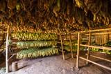 braune getrocknete Tabak Blätter in einer Scheune in Kuba