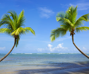 Palm trees and tropical beach on Caribbean sea as background.