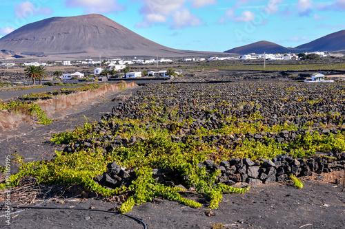 Fotobehang Lavendel Vineyards in La Geria Lanzarote