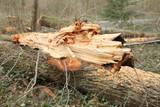 bois arbre