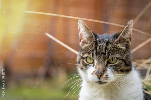 Piękny kot w pięknym świetle słonecznym