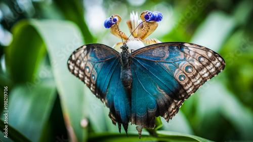 Blue Butterfly - 198219706