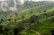 green tea plantation in Nuwara Eliya, Sri Lanka in the highland - 198220933