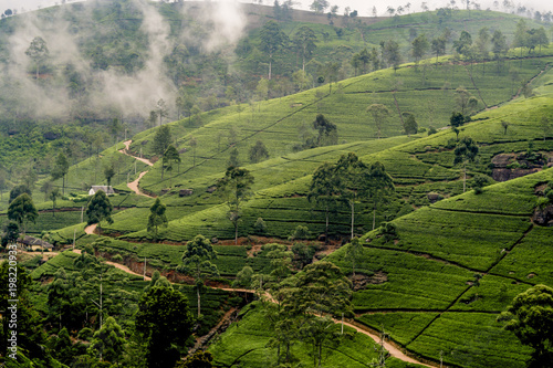 Aluminium Historisch geb. green tea plantation in Nuwara Eliya, Sri Lanka in the highland