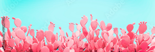 Niezwykły Różowy Kaktusa Pole Na Turkusowym Tle