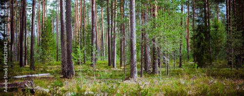Foto op Plexiglas Natuur Wild forest panorama