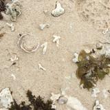 Seaweed – Shells – Coral - Sand