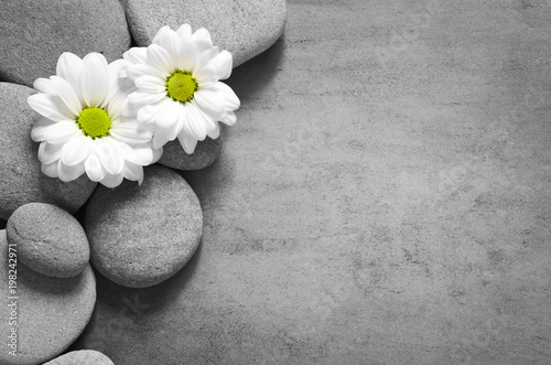 Set of white flowers on pebble