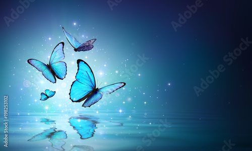 Fototapeta Fairy Butterflies On Water