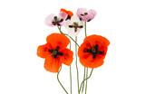 poppy flowers isolated