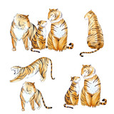 Watercolor tiger set