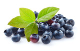Fresh blueberry with leaves in closeup