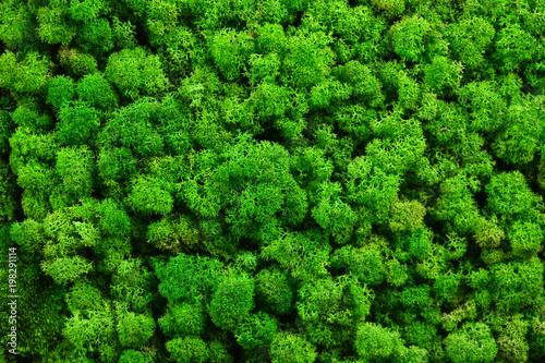 Green moss texture - 198291114