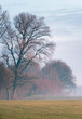 Bare winter trees in misty hilly grassland.