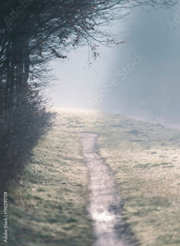 Hiking path in foggy winter countryside. - 198291709