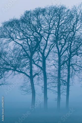 sylwetka-nadzy-zim-drzewa-w-mglowym-countrysi