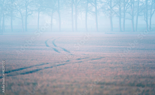 Fotobehang Gras Tire tracks in misty meadow. Trees at horizon.