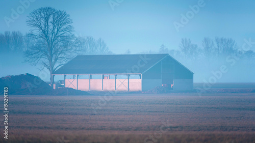 Foto op Aluminium Blauw Cowshed and bare winter tree in misty rural landscape.