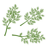 Fresh dill. Green vegetables. Cartoon green dill close-up. Vector illustration. - 198295598