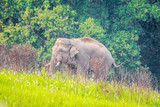 Young elephants eating grass at Khao Yai National Park, Thailand