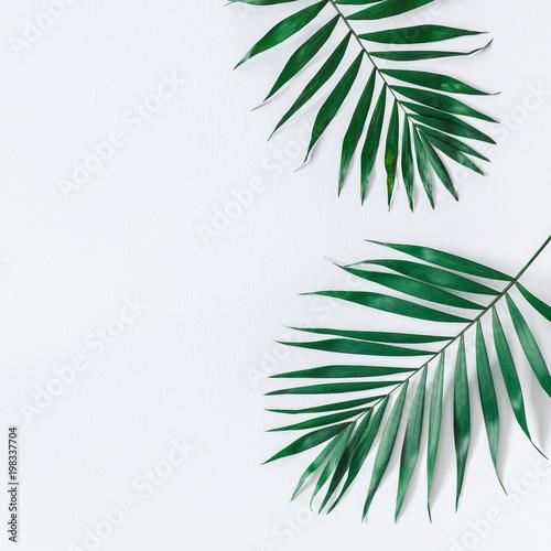 Wzór liścia. Zieleni tropikalni liście na popielatym tle. Koncepcja lato. Płaskie lay, widok z góry, kopia przestrzeń, plac