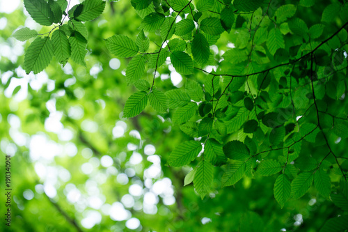 green leaves on the green backgrounds - 198340901