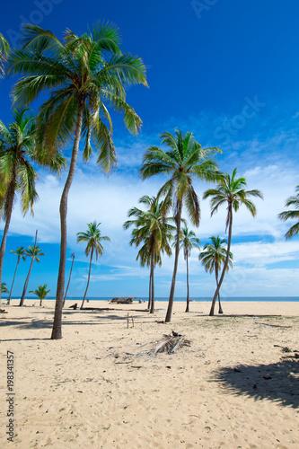 Foto Murales  beach and tropical sea