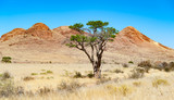 single acacia in the namib desert namibia africa - 198353962