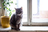 Cute funny tabby gray cat sitting on the window - 198357703