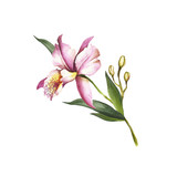 Image Orchids flowers. Hand draw watercolor illustration. - 198361709