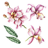 Set of Orchids. Hand draw watercolor illustration. - 198361733