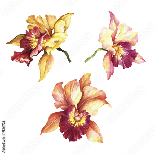 Set of Orchids. Hand draw watercolor illustration. - 198361722