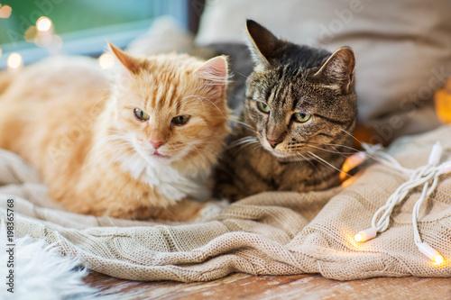 zwierzęta domowe, Boże Narodzenie i hygge koncepcja - dwa koty leżące na parapecie z kocem w domu
