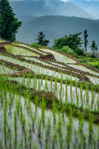 Fotobehang Rijstvelden Rice Paddy Terrace
