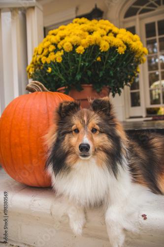Pumpkin Patch - 198380569