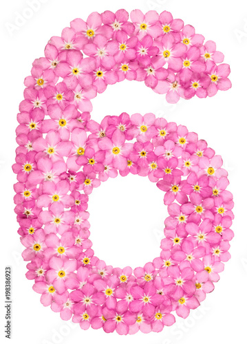 Arabic numeral 6 six from pink forget me not flowers isolated on arabic numeral 6 six from pink forget me not flowers isolated mightylinksfo