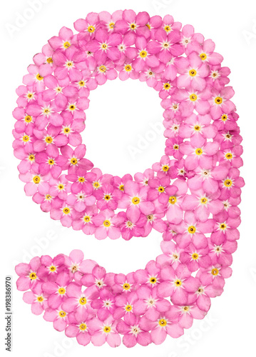 Poster Arabic numeral 9, nine, pink forget-me-not flowers, isolated on white background