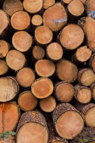 Foto op Aluminium Brandhout textuur Trees