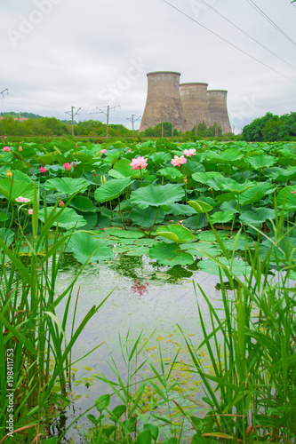 Fotobehang Groene a large lake full of lotuses, followed by the distribution station is located.