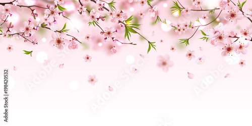 Panel Szklany Blooming branch chinese cherry background with falling petals, spring vector illustration