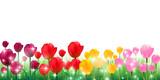 チューリップ 春 花 背景